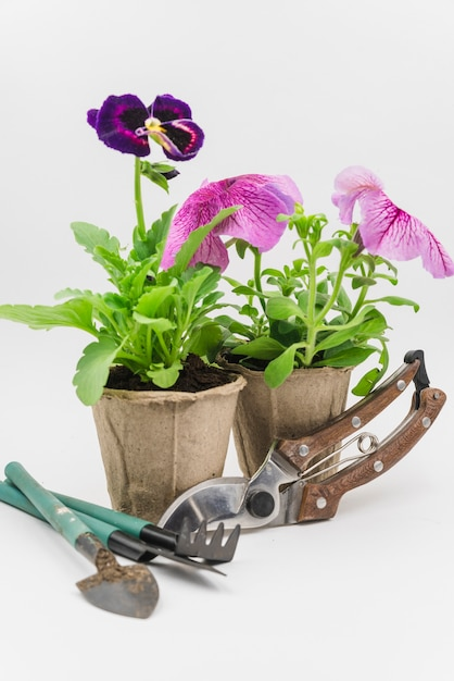 Mini gardening tools; secateurs with petunia and pansy flower plants on white backdrop Free Photo