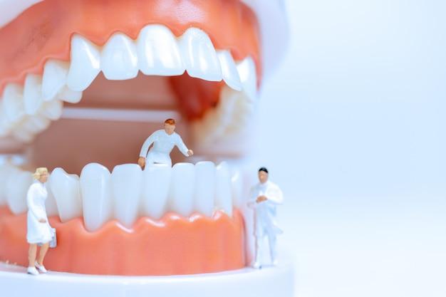 歯茎で人間の歯を観察し、話し合うミニチュア歯科医 Premium写真
