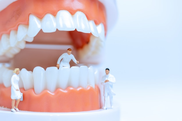 Miniature dentists observing and discussing about human teeth with gums Premium Photo