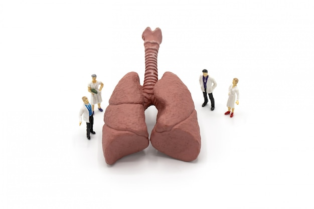 Miniature doctor and nurse observing and discussing about human lungs Premium Photo