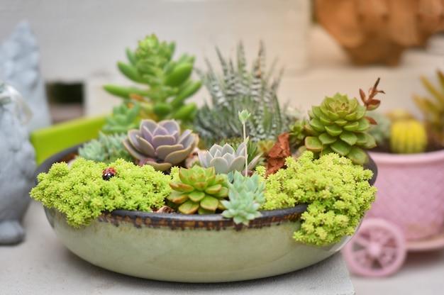 Miniature Succulent Plant Beautiful Mix Collection Set Succulent
