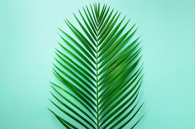 Minimal summer concept. top view green leaf on punchy pastel paper. tropical palm leaves on blue background. Premium Photo