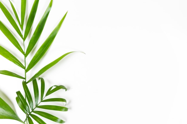 Minimalist background with green leaves on white Free Photo