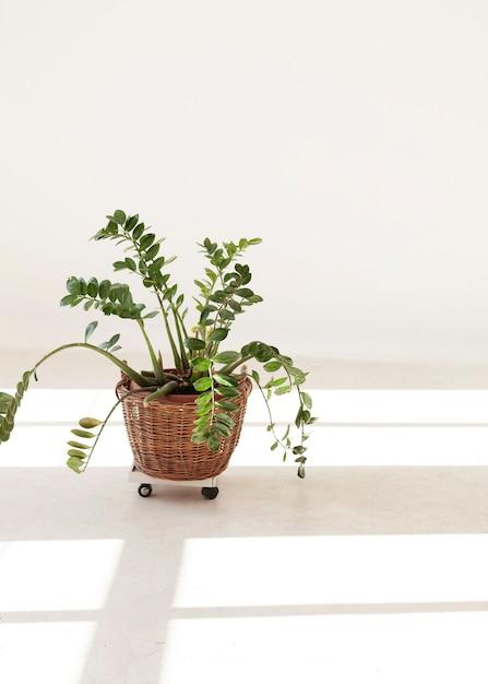 Pianta domestica minimalista con e ombre di finestra Foto Gratuite