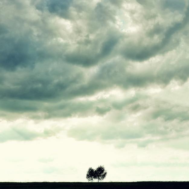 Minimalist single tree silhouette. concept of loneliness, depression, escape, friendship, support, care, marriage. Premium Photo