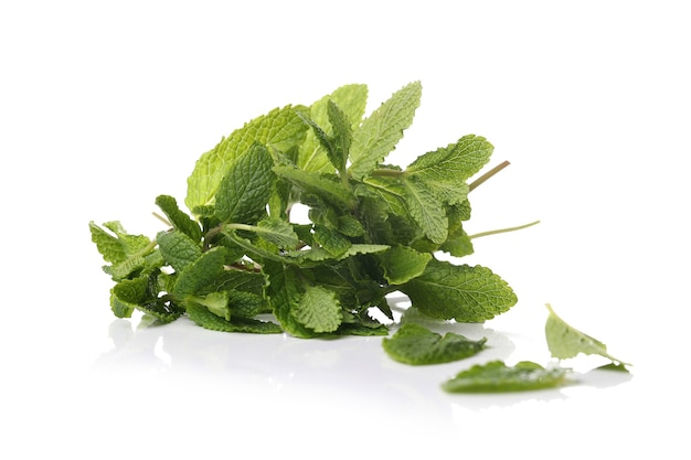 Mint leaves on a white surface Free Photo