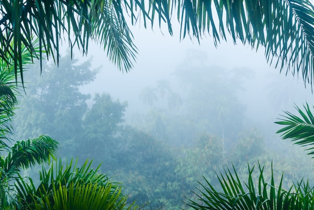 Misty forest landscape view in nature leaves frame Premium Photo