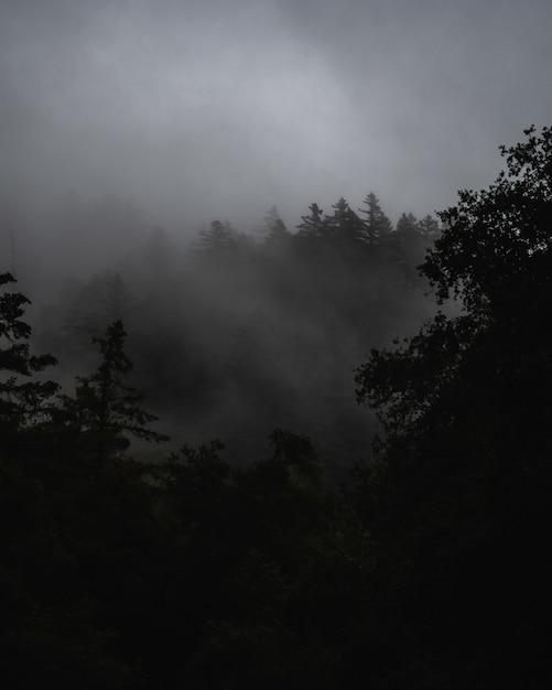 어두운 폭풍 구름 아래 안개로 덮여 숲과 안개 낀 풍경 무료 사진
