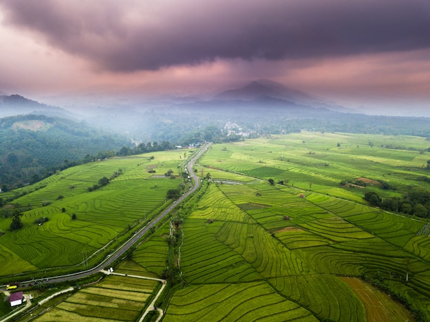 Misty morning at paddy fields with mountain in north bengkulu, indonesia Premium Photo