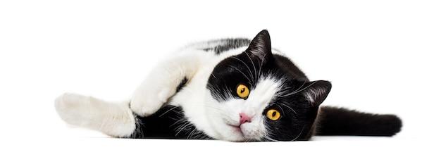 孤立した側に横たわっている混合品種の猫 Premium写真