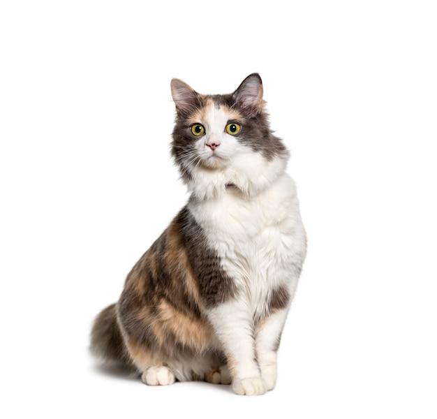 Mixed-breed cat sitting Premium Photo