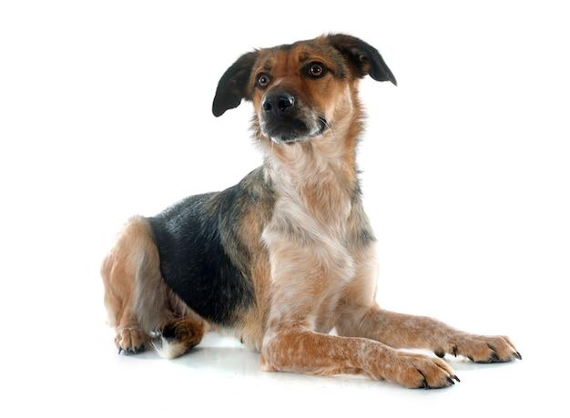 Mixed-breed dog Premium Photo