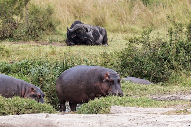Смешанная группа животных возле небольшого пруда в саванне африки Premium Фотографии