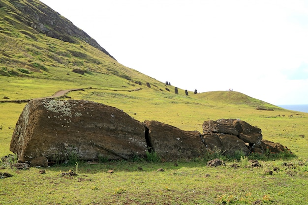 Moai statue lying on the ground at rano raraku volcano with group of moai on the slope in backdrop, easter island, chile Premium Photo