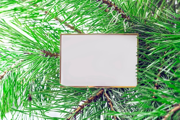 Mock up of christmas gift or note card fir tree branch Premium Photo