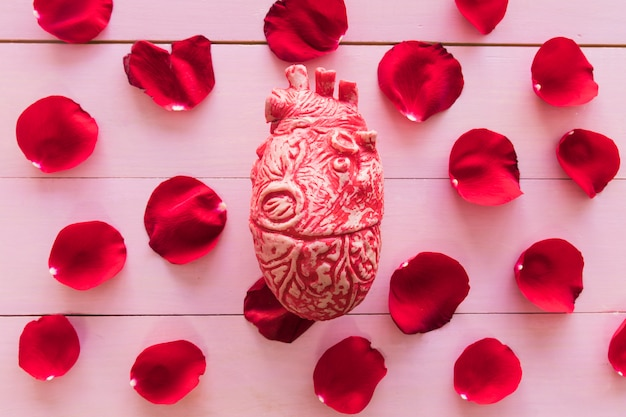 Model of heart and set of red flower petals Free Photo