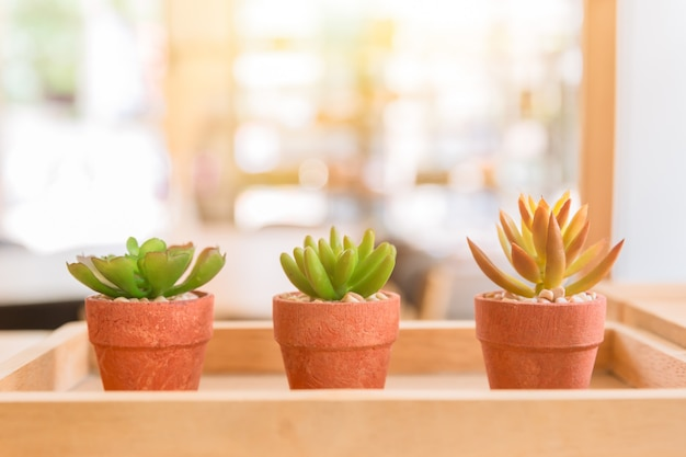 Modern cafe nature small plant in pot or home decoration Premium Photo