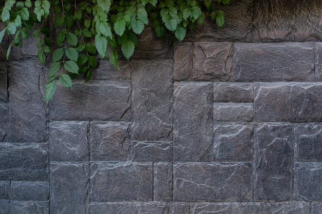 Современная каменная кирпичная стена фон с зеленым растением. каменная текстура с копией пространства Бесплатные Фотографии