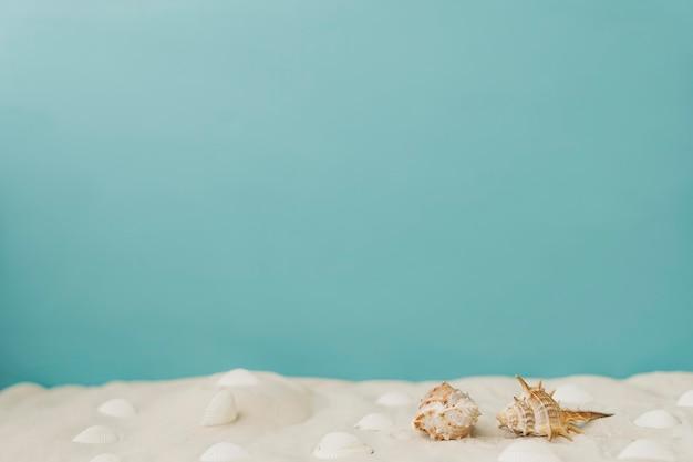 砂の軟体動物 無料写真