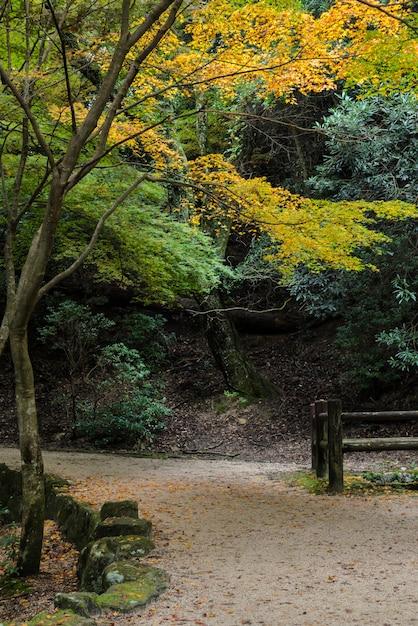Momijidani парк тропа в осенний сезон, миядзима, япония Premium Фотографии