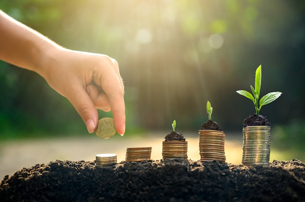 Money growth saving money. upper tree coins to shown concept of growing business Premium Photo
