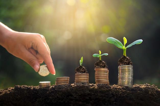 Money growth saving money. Premium Photo