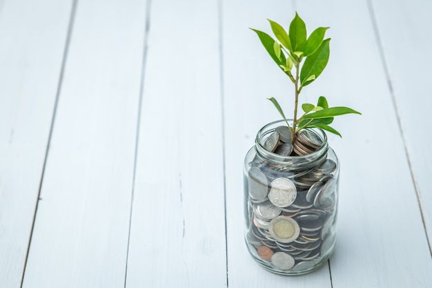 The money growth symbol, the young tree plant in the glass bottle with coins Premium Photo