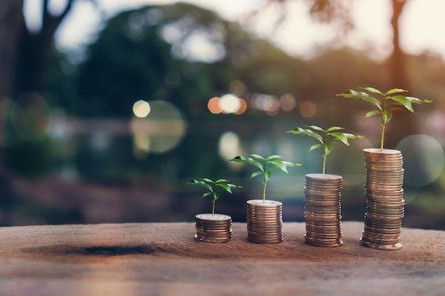 Money, plant on pile coins growing concept and the financial goals success. Premium Photo