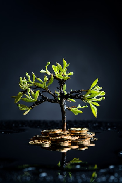 Money tree with coins after the rain on a dark wall Premium Photo