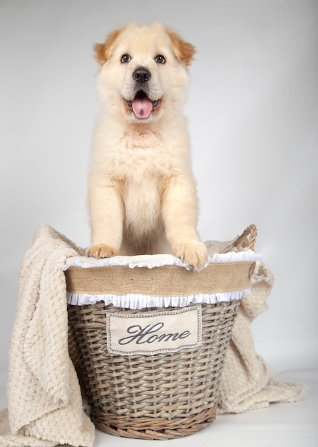 Mongrel puppy inside a basket Premium Photo