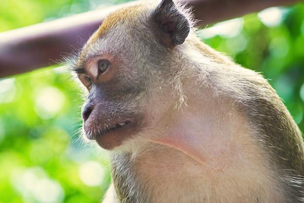 Monkey face close up Free Photo