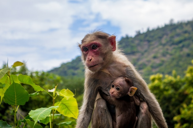 A monkey and its baby Free Photo