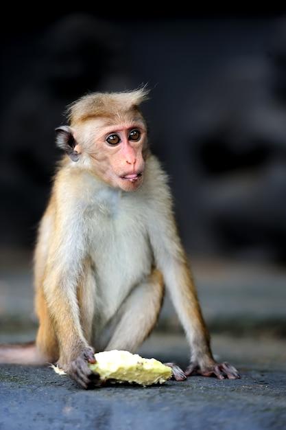 Scimmia nella natura vivente Foto Gratuite