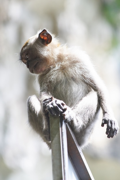 Monkey on a door frame Free Photo & Monkey on a door frame Photo | Free Download