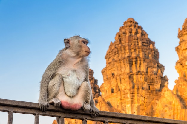 Monkey sitting on fence with a pagoda in the background,lopburi thailand Premium Photo