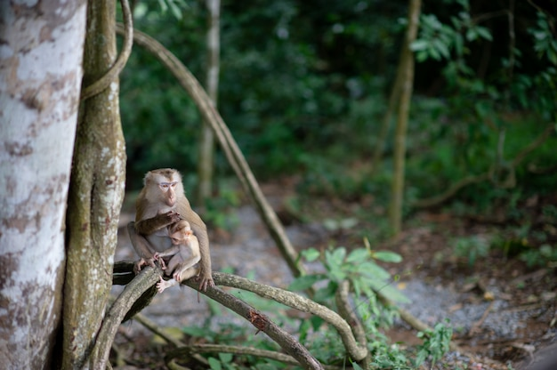 Monkeys and monkeys in the fertile forest Premium Photo