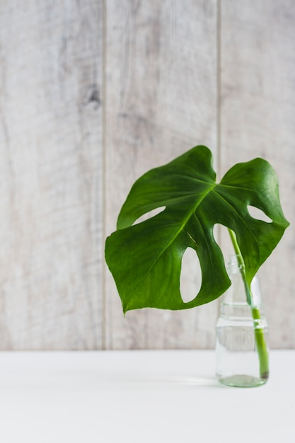 Monstera green leaf in glass vase on white desk against wooden backdrop Free Photo
