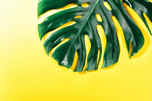 Monstera green leaf on yellow Free Photo