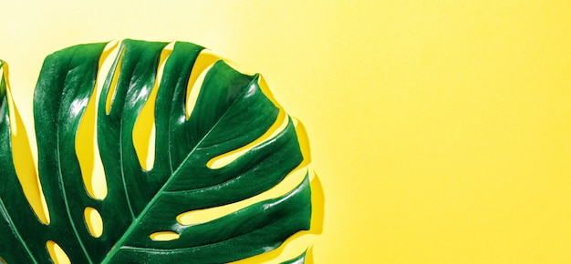 Monstera green leaf on yellow Free Photo