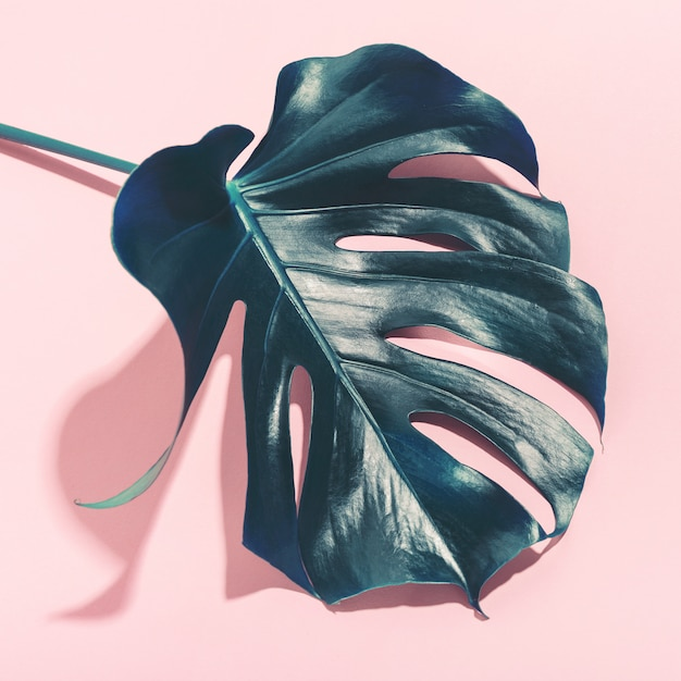 Monstera green leaff on pink Premium Photo