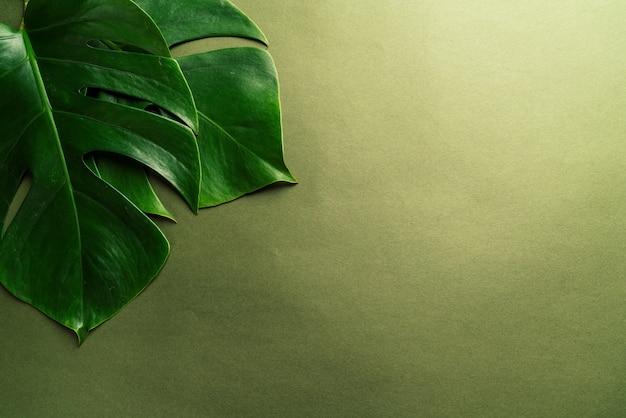 Monstera leaf on green surface Premium Photo
