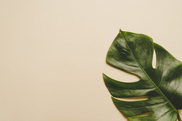 Monstera leave on brown beige background Premium Photo