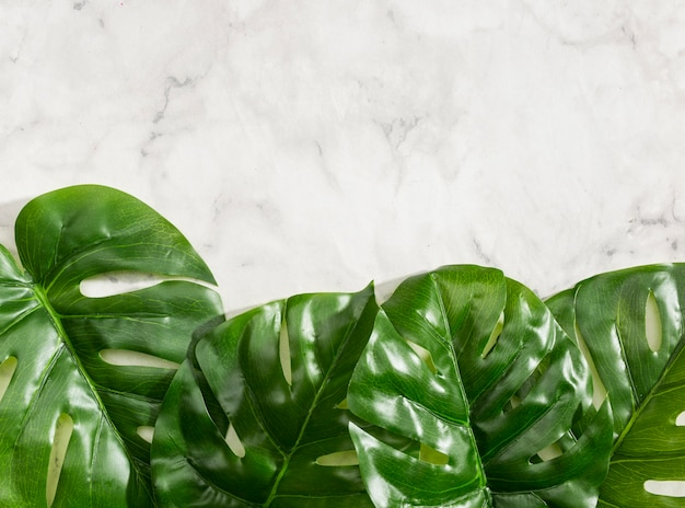 Monstera leaves on marble background Free Photo