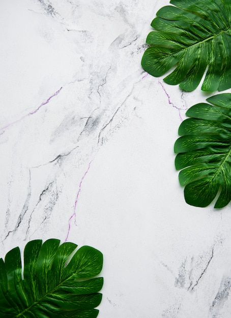 Monstera leaves on a marble background Premium Photo