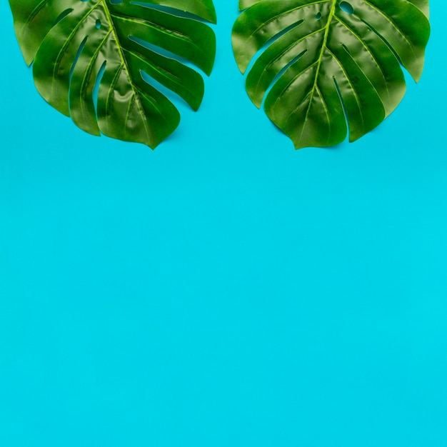 Monstera leaves with copy space below Free Photo