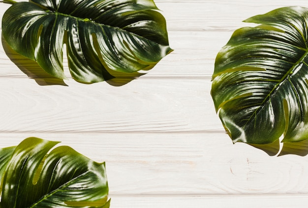 Monstera leaves on wooden background Free Photo