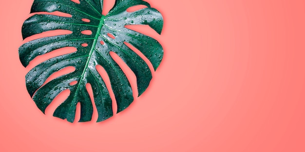 Monstera tropical leaves on coral color background minimal summer Premium Photo