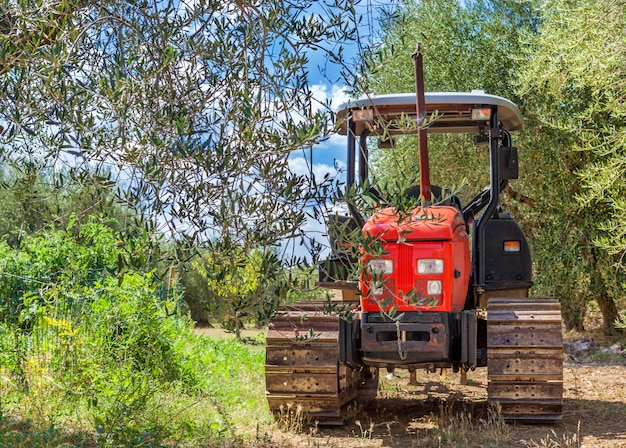 Montepulciano, italy - august 25, 2013: red tractor stands in the middle of a grove of olive trees. Premium Photo