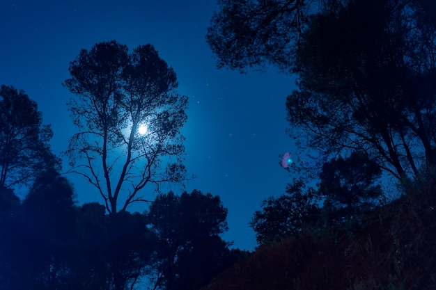 Moonlight behind a tall tree Free Photo