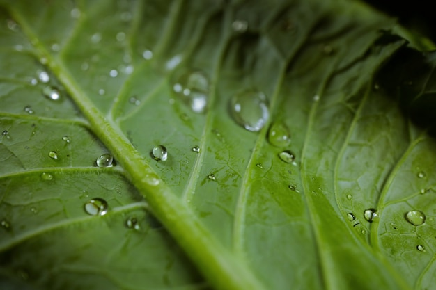 Morning drop of dew on a green leaf Premium Photo